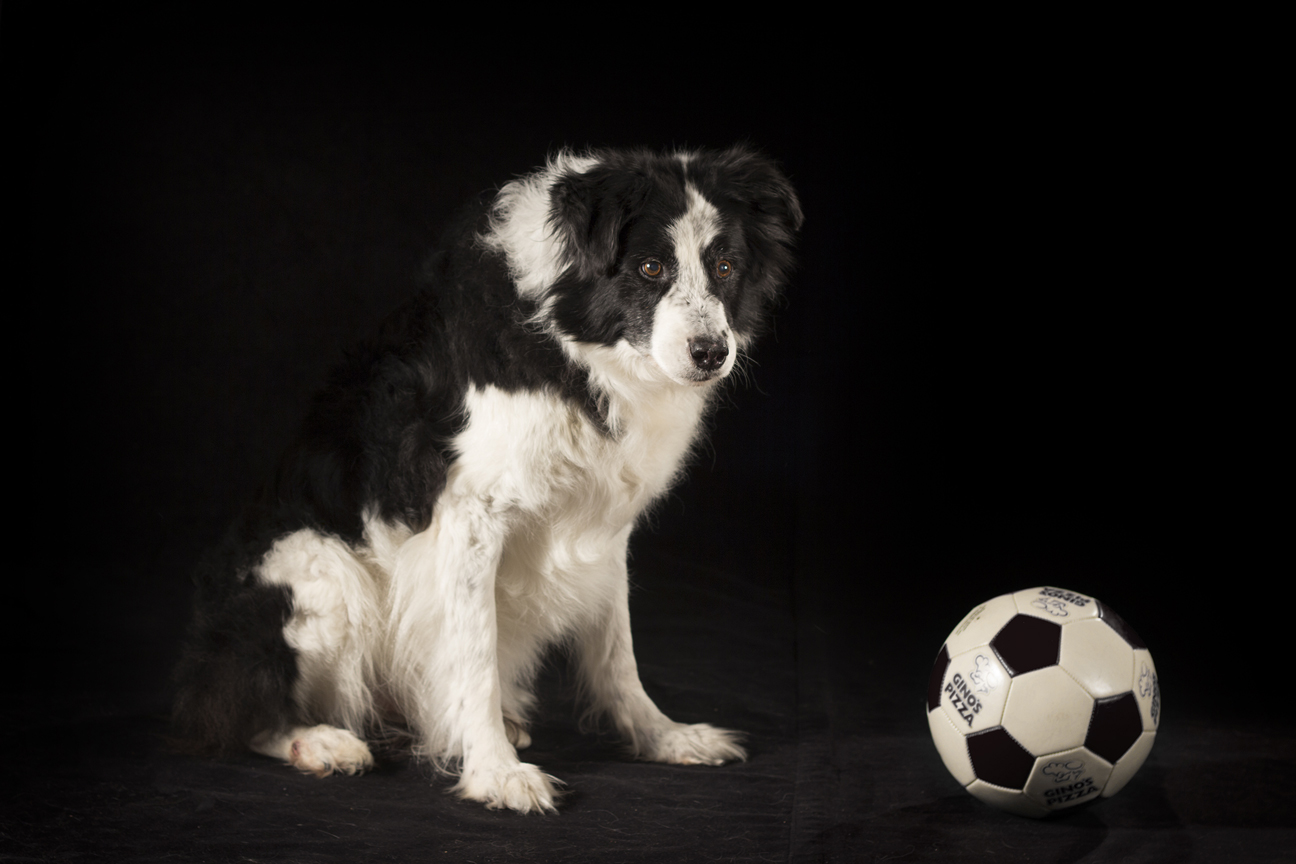 Border Collie<br>Supercollie's Rescue Remedy CD